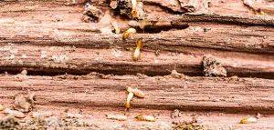 No-Tent Termite Treatment & No-Tent Termite Treatment | Florida Pest Control Center Fort ...